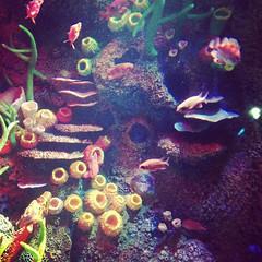 coral reef, coral, fish, coral reef fish, organism, marine biology, invertebrate, underwater, reef, aquarium,