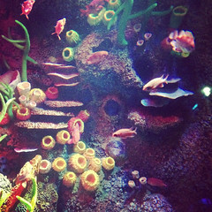 deep sea fish(0.0), coral reef(1.0), coral(1.0), fish(1.0), coral reef fish(1.0), organism(1.0), marine biology(1.0), invertebrate(1.0), underwater(1.0), reef(1.0), aquarium(1.0),