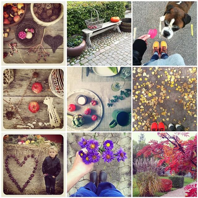 Höst - instagram
