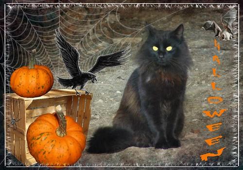 Happy Halloween l