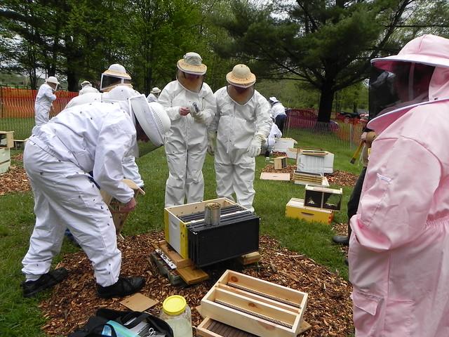 Beekeeping 2013