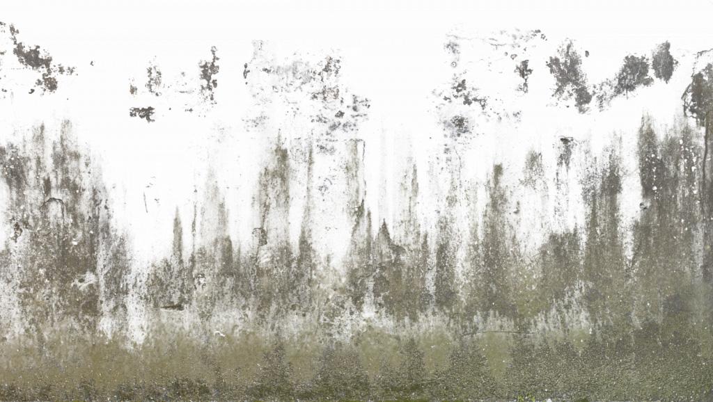 Alpha texture sketchup generale treddi.com il portale italiano