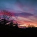 Small photo of Amanecer