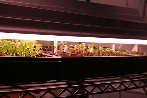 seedlings 7028