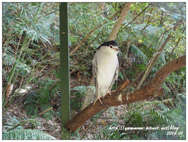 森林鳥花園49