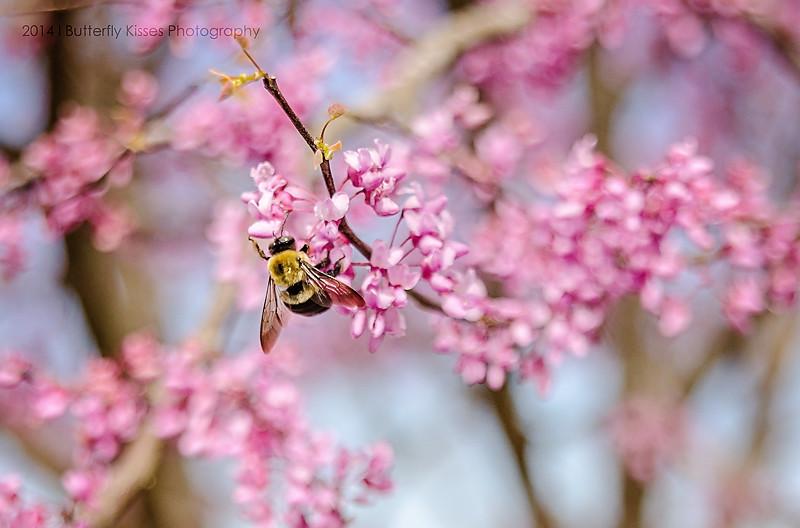 flowers-0982 web