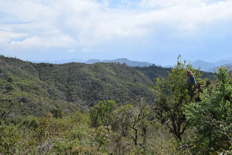 ちなみに岩窟寺院までの道中、木の上に登って農作業しているスーパーオバーチャンがいました(下は断崖絶壁)
