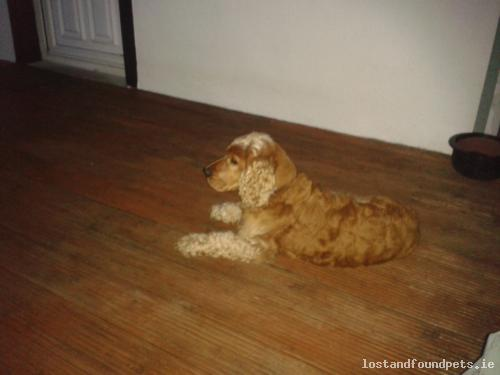 Sun, May 4th, 2014 Lost Male Dog - R749, Shillelagh, Wicklow
