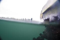 West Seattle Aiki beach (23) Seattle underwater