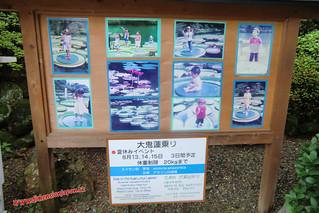 CIMG1093 Plantas que levantan niños en el agua, Infierno Umi Jigoku (Beppu) 13-07-2010 copia