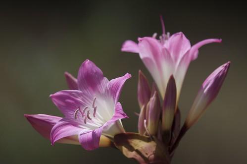 flowers d7100 3004afs