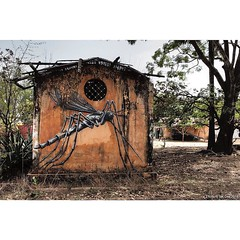 'Mosquito' ROA in #Gambia #Africa. Recovered files from the #wideopenwallsproject. #Wallkandy #art #painting #streetart #kubuneh #mural #mosquito #fb #f #t #p #roa #graffiti