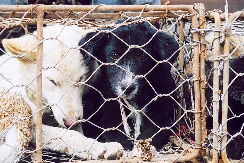 Sad black dog in cage