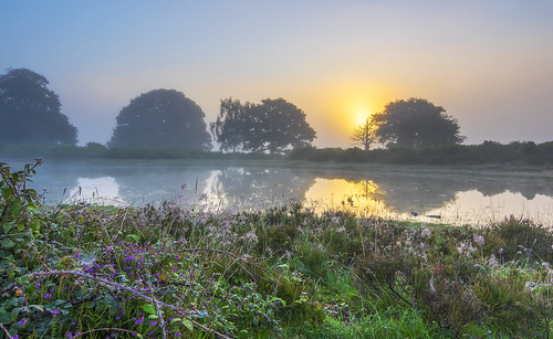 grass landscape mist mogshade newforest pond reflection sunrise water