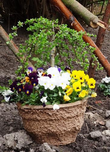 geschenkter Blumentopf mit Miniweide