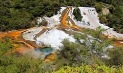 Orakei Korato thermal area