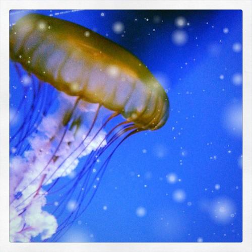 #jellyfish #livingplaneraquarium
