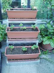jetzt ist pflanzzeit f r erdbeeren im garten vdgv. Black Bedroom Furniture Sets. Home Design Ideas