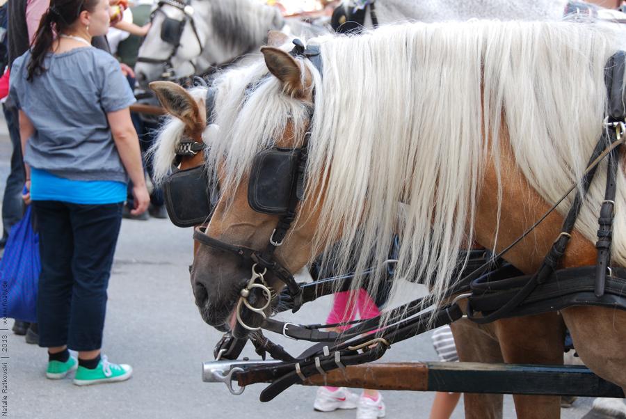 Salzburger Pferde