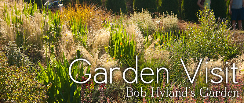 Bob Hyland Header