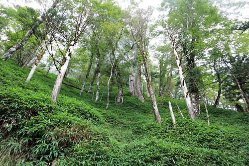 大普賢の林の中