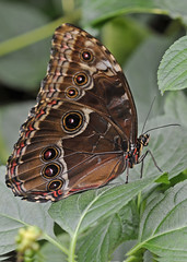 The Butterfly Farm - Stratford upon Avon