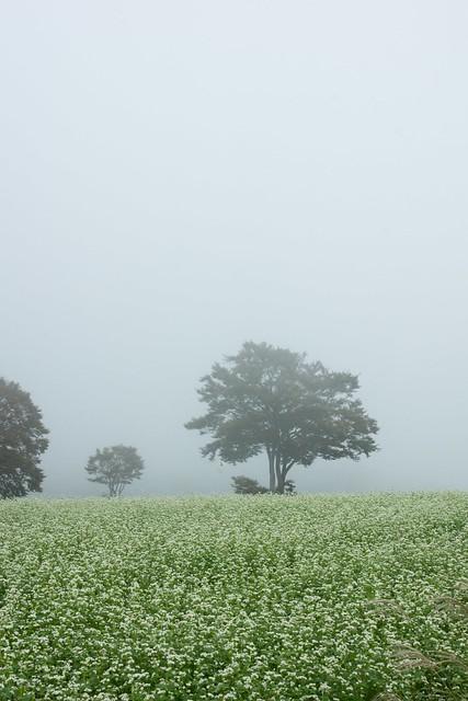 写真_秋霧の高原