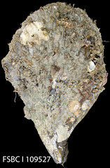 mineral, igneous rock, geology,