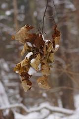 Leftover leaves
