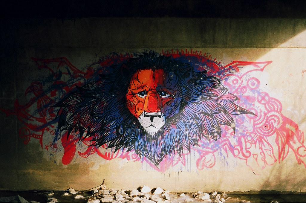 Selbstbewuβter Löwe (wide)