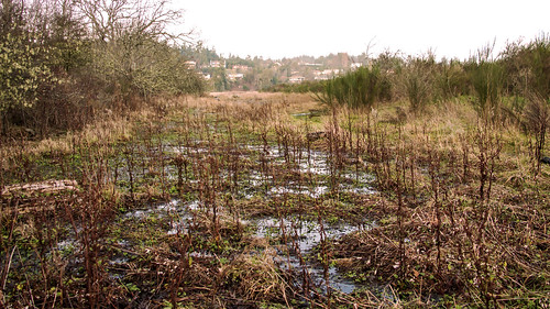 Witty's Lagoon_ swamp 2