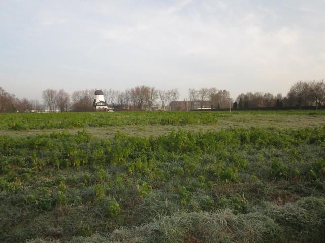 Hier soll das neue Feuerwehrgerätehaus Roxel nach dem nichtöffentlich beschlossenen Willen der SPD und CDU errichtet werden