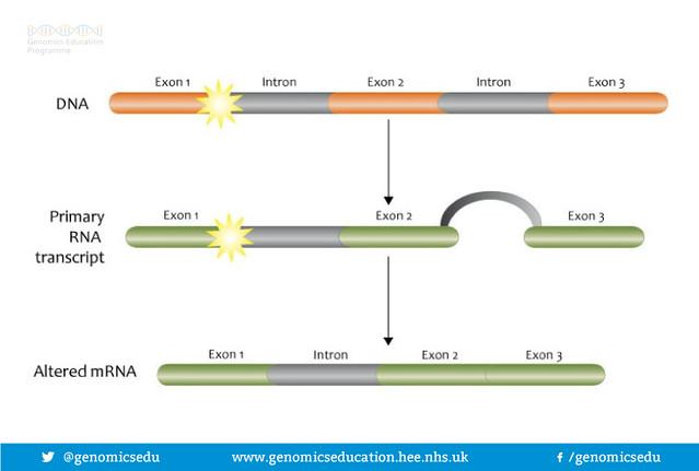 Splice site mutations