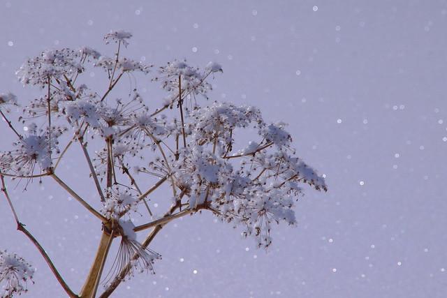 Snow flake 1