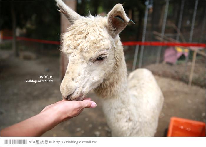 【彰化景點】克林姆莊園Cream Manor~小型動物園!戶外親子同遊好去處42