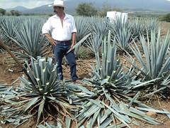 produce(0.0), aloe(1.0), flora(1.0), agave azul(1.0),