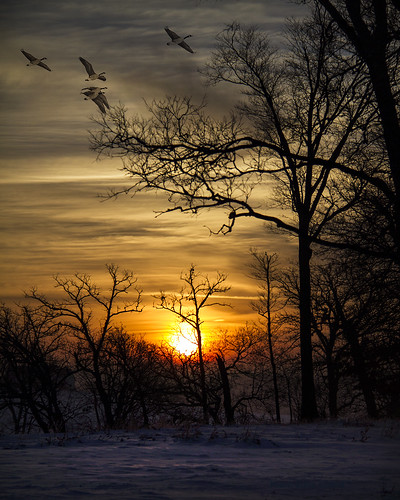 morning trees light sky snow sunrise golden geeses