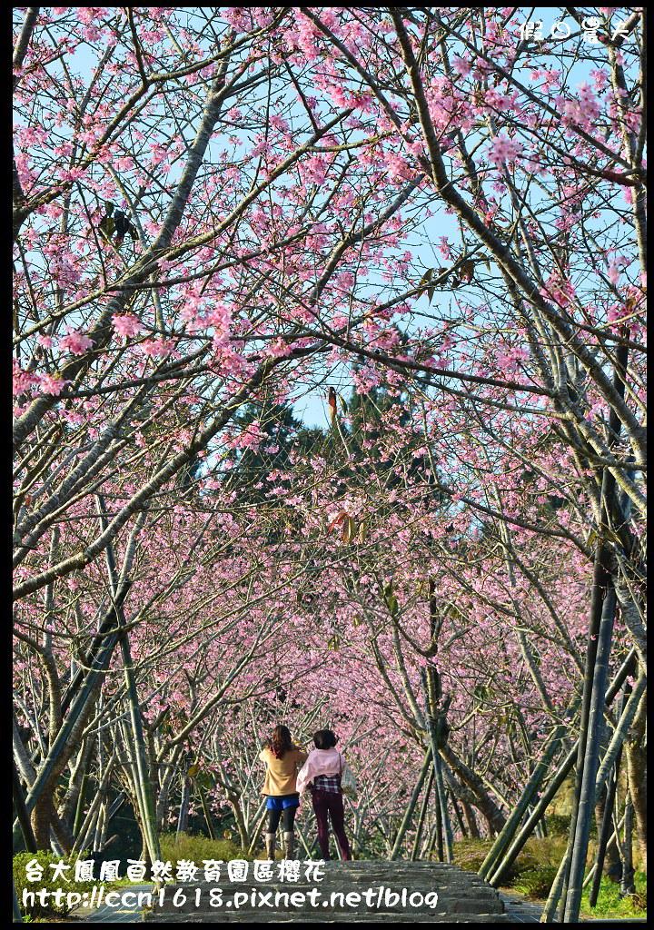 台大鳳凰自然教育園區櫻花DSC_5932