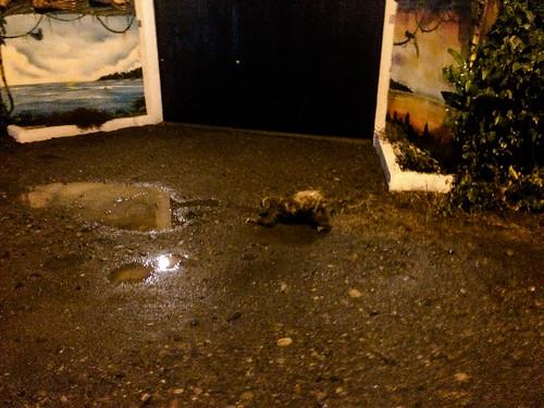 Cahuita: un paresseux tout mouillé dans la rue menant à notre hôtel
