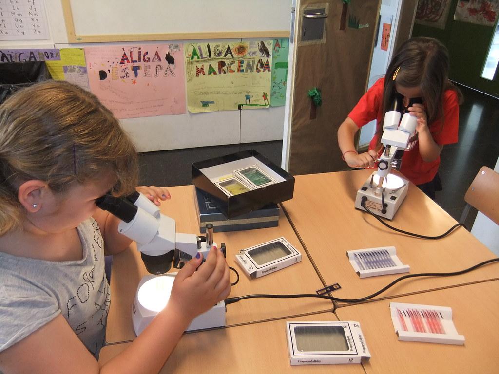 mirem mostres a la lupa binocular i al microscopi (1)