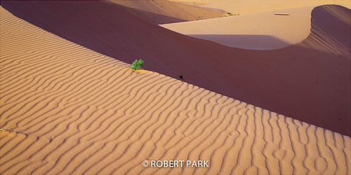 "Coral Sandscape" By Robert Park  http://www.robert-park.com by Robert Park Photography