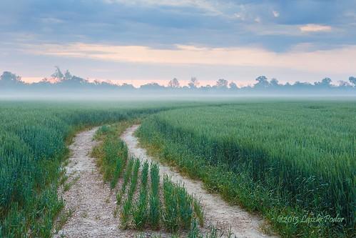 usa mist field misty fog sunrise cloudy tennessee wheat foggy agriculture dyersburg