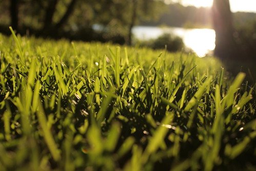 sunset lake green grass florida blade tallahassee canonef35mmf14lusm