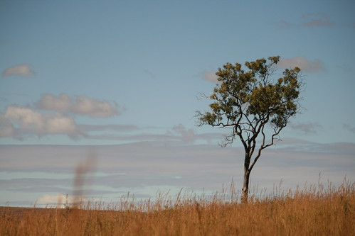 tree landscape boom madagascar landschap madagaskar