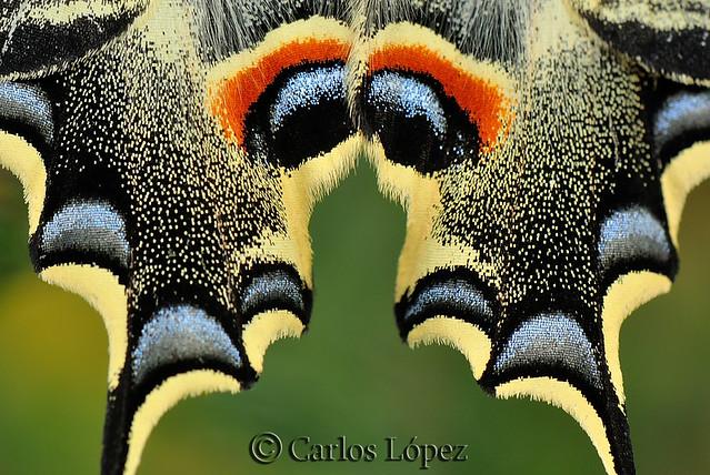 Detalle alas mariposa