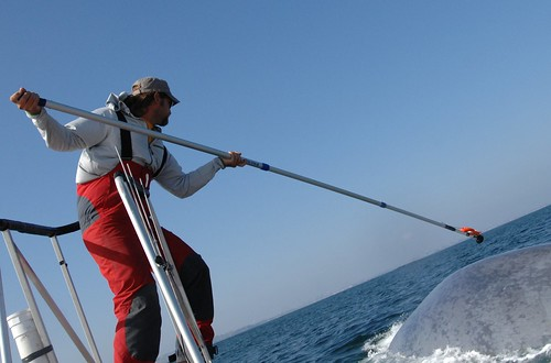 Ari Friedlaender a Duke University researcher tags a blue whale with a data tag during a Navy-funded behavioral response study