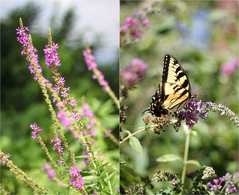 Butterflynewhope.jpg