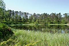 Norway: Bergen Pond