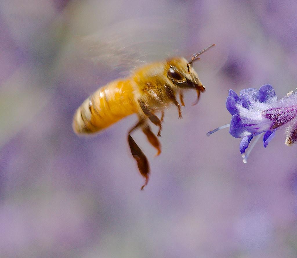 Bee_8