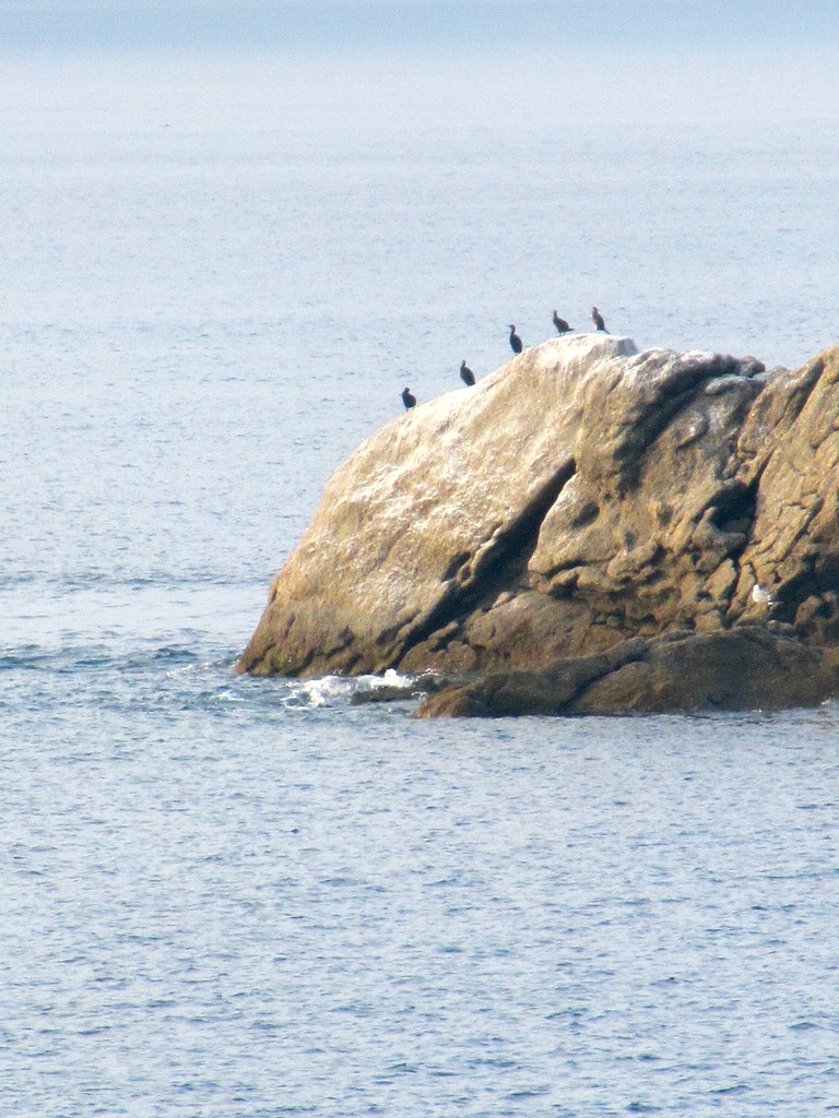 Fila de cormoranes